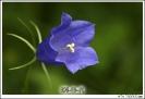 image09771